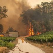 australia-fire-grape-wine